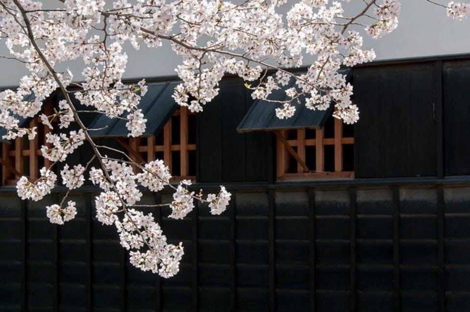 御朱印巡りに訪れた熊本の寺社