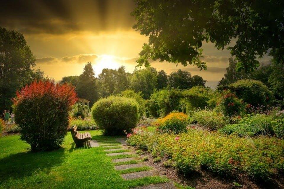 庭のオシロイバナの花言葉 夕方